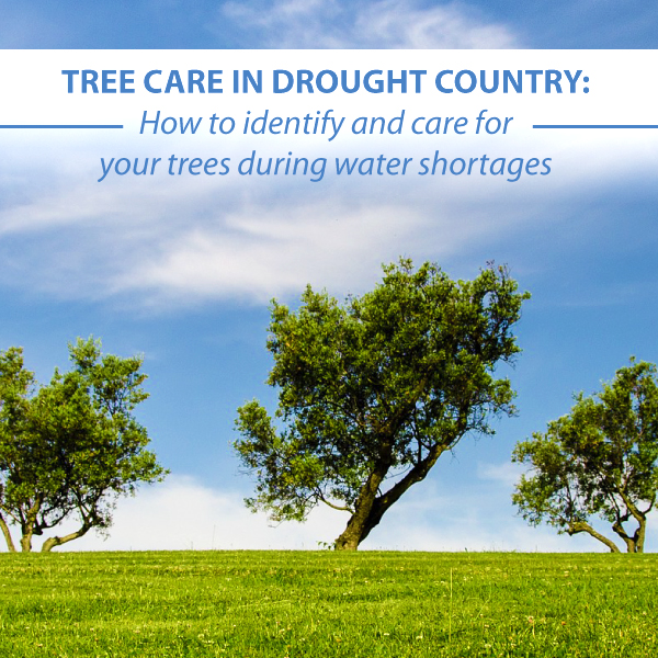Tree Care in Drought Country