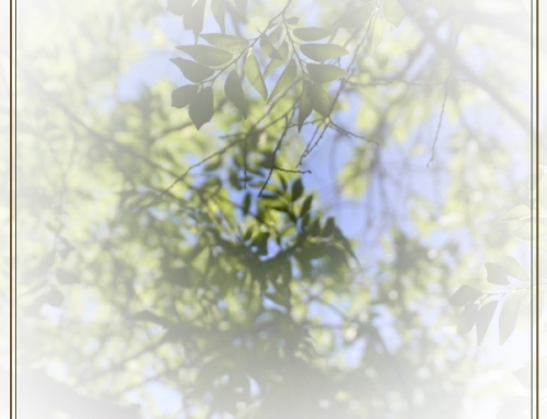 Recognizing Tree Disease