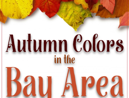 Autumn Colors in the Bay Area