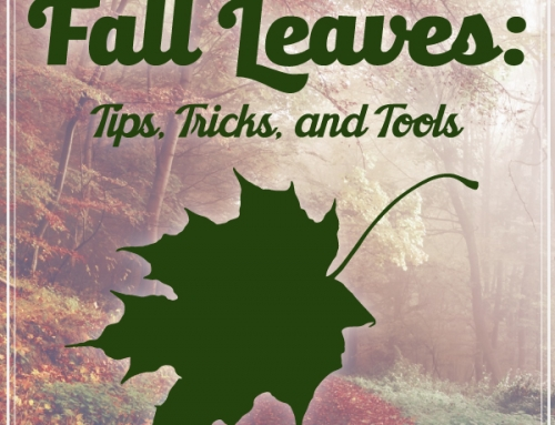 Fall Leaves: Tips, Tricks, and Tools